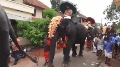 Enlace a Nunca te coloques detrás de un elefante