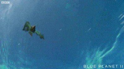 Enlace a Una ave Vs un pez gigante. La naturaleza nos deja momentos impagables