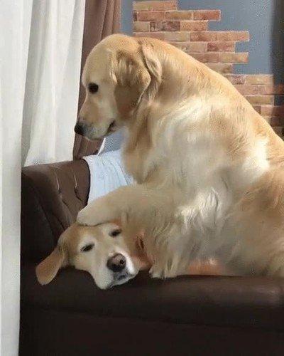 Enlace a Perros que actúan de una forma demasiado humana