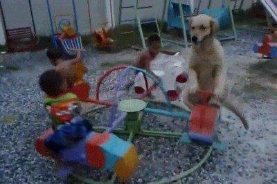 Enlace a Perros que han aprendido a jugar con los más pequeños