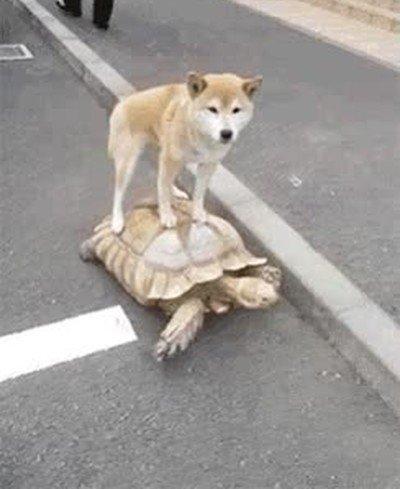 Enlace a Uber ha creado un servicio para perros con tortugas