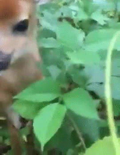 Enlace a Bambi usó placaje pero no es muy efectivo