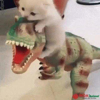 Enlace a No nada más adorable que un gatito encima de un dinosaurio