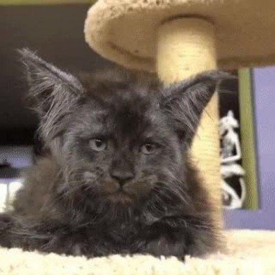 Enlace a El gato con la cara más humana que he visto nunca