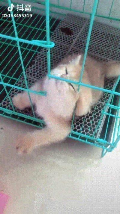 Enlace a Hay animales que simplemente han nacido para ser libres