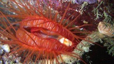 Enlace a Criaturas marinas que podrían pasar por una discoteca