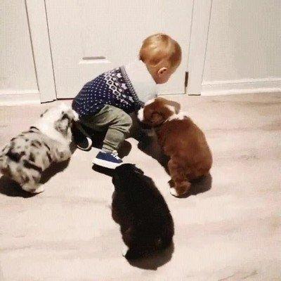 Enlace a Ni 4 perros juntos pueden detener a este niño