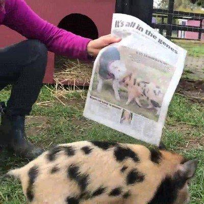 Enlace a Está la mar de contento de ver su cara en la portada del periódico local