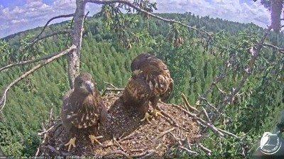 Enlace a Esta águila ya ha tenido bastante de las tonterías de su hermano