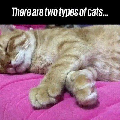 Enlace a En esta vida hay dos tipos de gato...