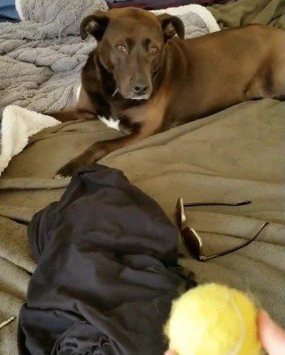 Enlace a Hay perros que simplemente no han nacido con el don de atrapar la pelota