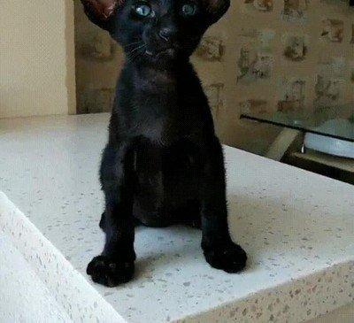 Enlace a Un gato negro con una carita adorable