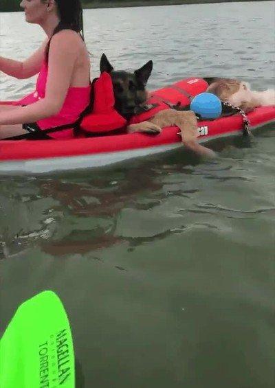 Enlace a Ojalá tener unas vacaciones tan tranquilas como las de este perro