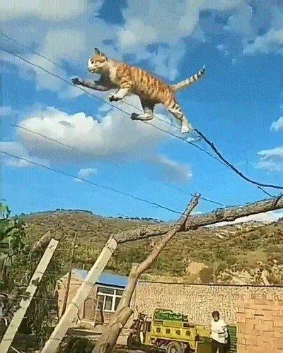 Enlace a Este gato sabe a lo que va