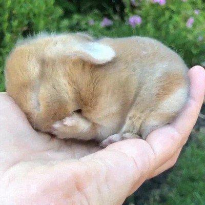 Enlace a El conejito más adorable que verás nunca