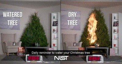 Enlace a Recuerda que es conveniente que riegues tu árbol de navidad
