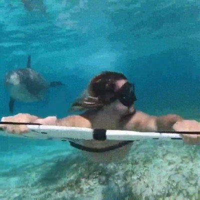 Enlace a Un delfín curioso que decide hacerle compañía