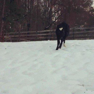 Enlace a Animales disfrutando de un día de nieve