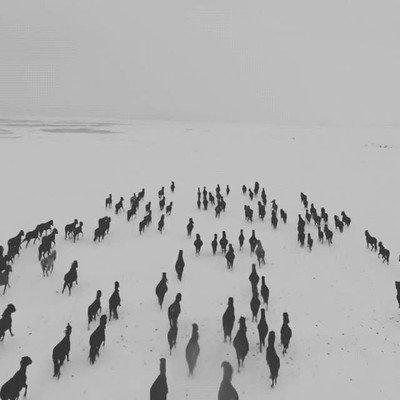 Enlace a Hay algo muy poético en ver caballos corriendo sobre la nieve
