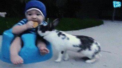 Enlace a Se ha quedado sin merienda por culpa de un conejo