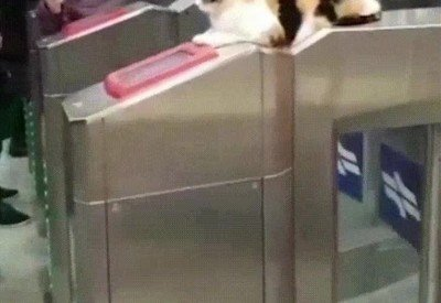 Enlace a El revisor del futuro: todos deben pasar por la supervisión de este gato