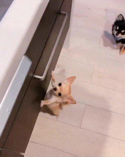 Enlace a Perrito nervioso cuando llega la hora de la comida