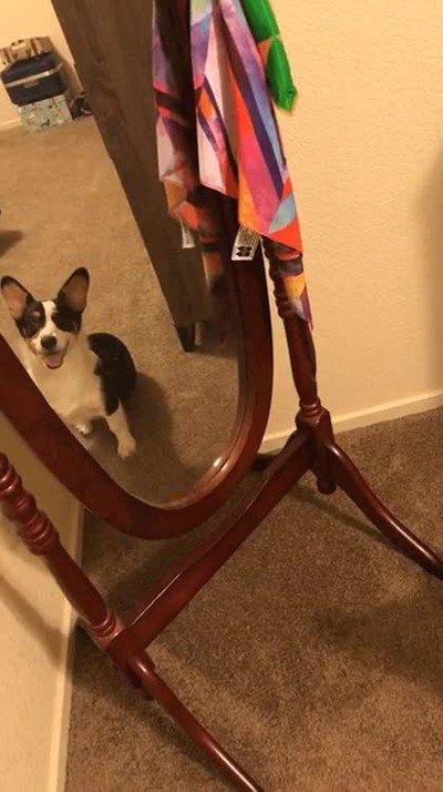 Enlace a Perros que reaccionan de forma graciosa al ver su propio reflejo