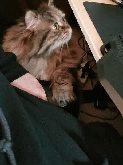 Enlace a La genial forma de mi gato de pedir un poquito de atención