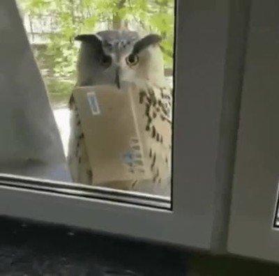 Enlace a Hola, le traigo un paquete secreto desde Hogwarts