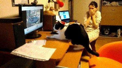 Enlace a Todo son risas hasta que el gato se carga la pantalla