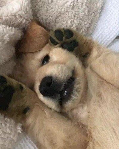 Enlace a Cuando le preguntas a un cachorro si ha sido un buen chico