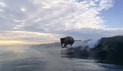 Enlace a Lo que sueñan los elefantes cuando cierran los ojos