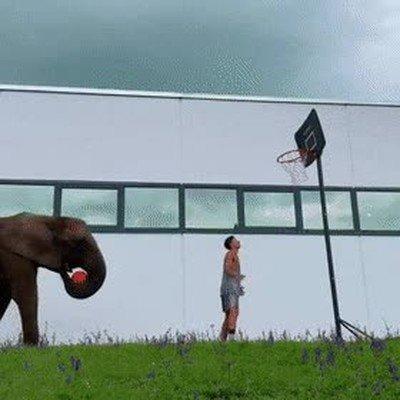 Enlace a ¿Quién necesita ser un atleta cuando tienes la ayuda de un elefante?
