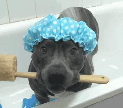 Enlace a Perros que adoran cuando llega la hora del baño