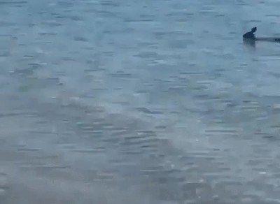 Enlace a No tenía ni la menor idea de que pueden nadar
