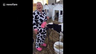 Enlace a No es buena idea ir a un zoo disfrazado de animal