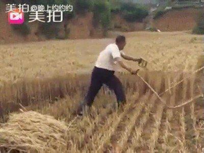 Enlace a Me recuerda a cortar hierba con la espada en The Legend of Zelda