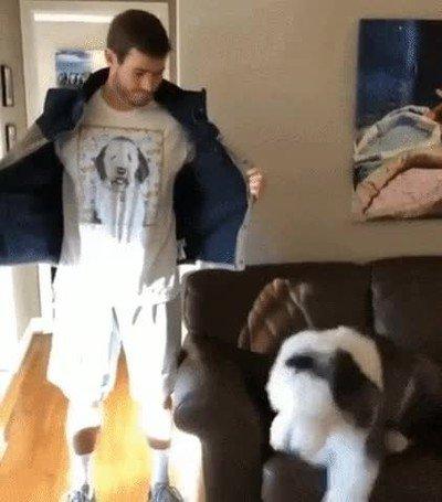 Enlace a Al perro le ha encantado la nueva camiseta