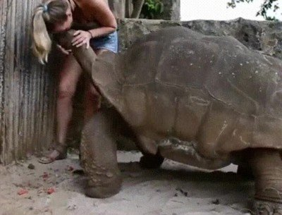 Enlace a Creo que es la tortuga más grande que he visto nunca