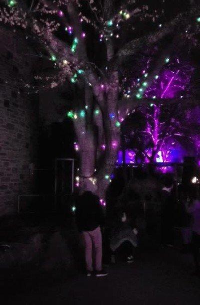 Enlace a Este árbol se enciende después de recoger toda la energía del resto de árboles del parque
