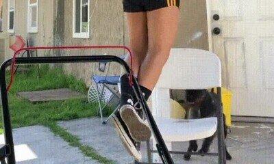 Enlace a Este perro es el mejor compañero de gimnasia