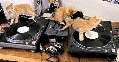 Enlace a Ojalá escuchar la música de estos DJ gatunos