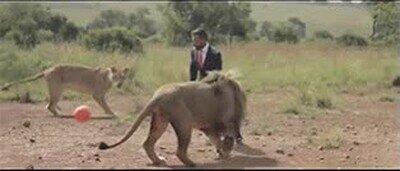 Enlace a Así se siente el jugar a futbol con una manada de leones