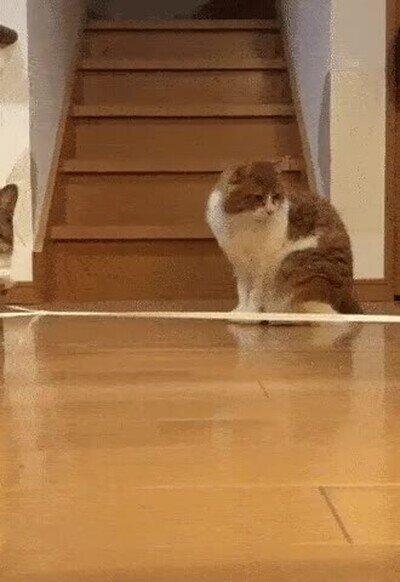 Enlace a En esta vida existen dos tipos de gato