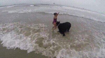 Enlace a El verdadero protector, evita que la niña entre a las olas