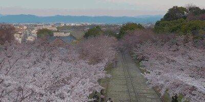 Enlace a Espectacular timelapse de flores floreciendo en primavera