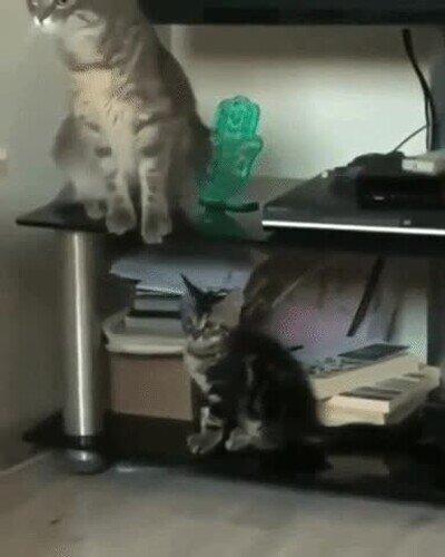 Enlace a El efecto gato