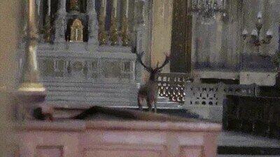 Enlace a Como no hay nadie, este ciervo entra en una iglesia de Francia a confesarse