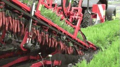 Enlace a Una máquina para recoger la cosecha de zanahorias a gran velocidad