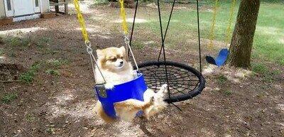 Enlace a Ojalá algún día llegar a estar tan relajado como este perro